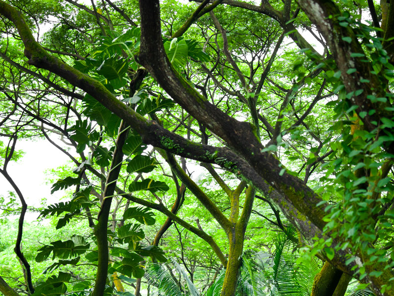 rich green foliage on trees